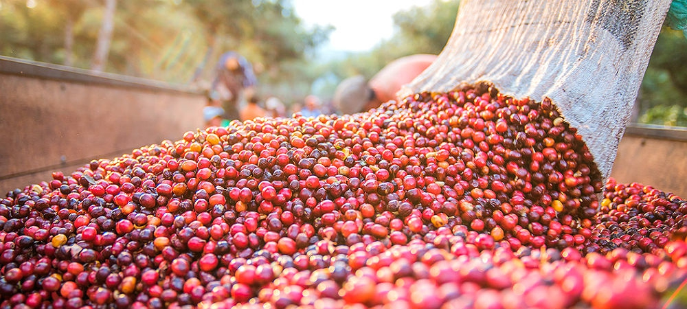 Гібридні процеси обробки кави