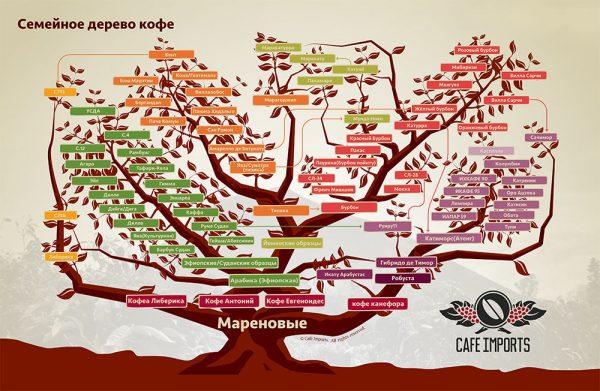 різновиди кавового дерева