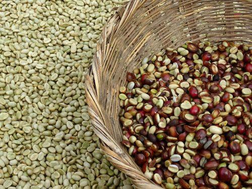 обробка кавових ягід